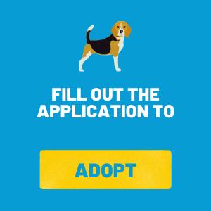 Adopt a Beagle