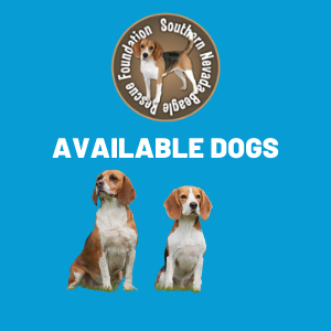 available dogs