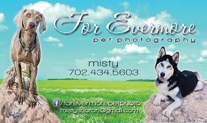 For Evermore Pet Photography