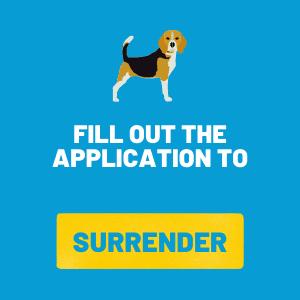 Surrrender a Beagle